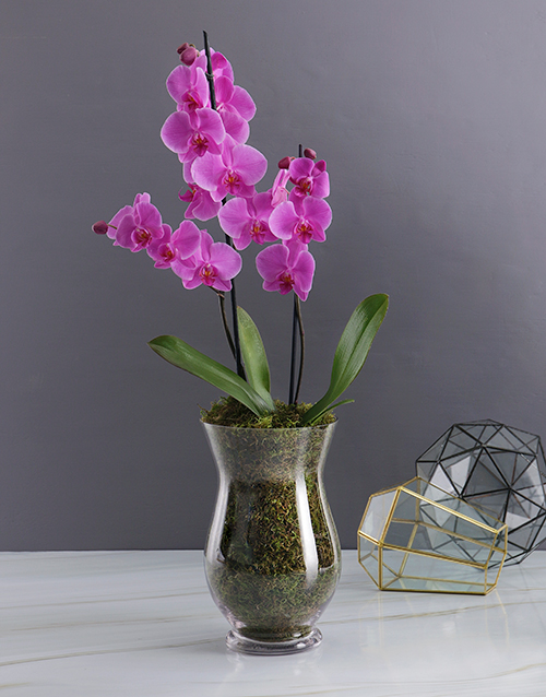 new-years: Orchid Glass Vase!