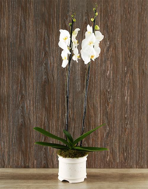 colour: Whisper Beijing Orchid!