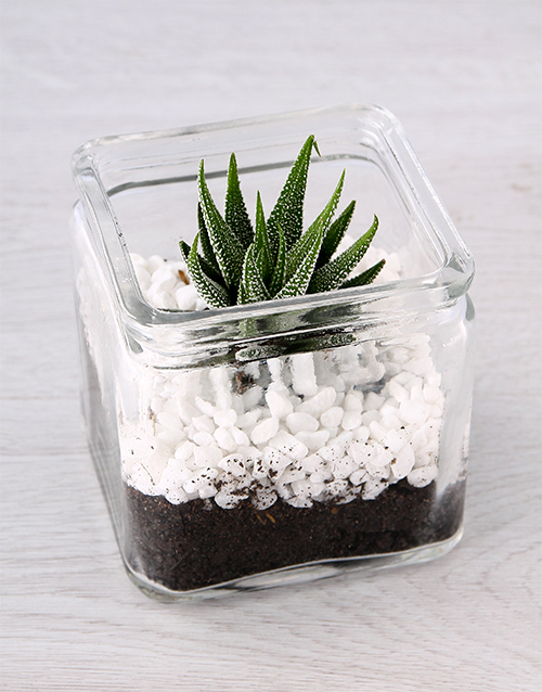 green: Glass Vase with a Petite Succulent!