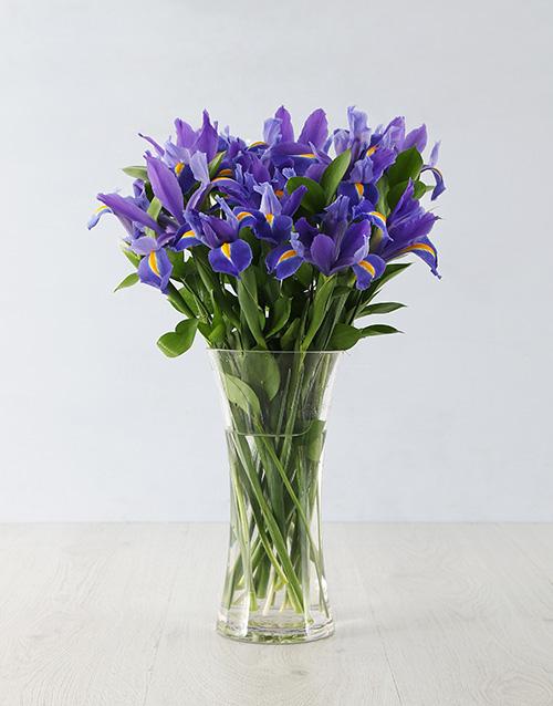 colour: Irises in a Glass Vase!
