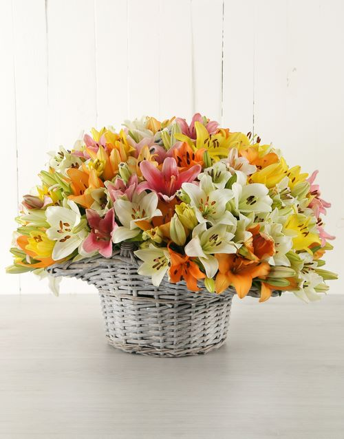 anniversary: Mixed Asiflorum Lilies in Willow Basket!