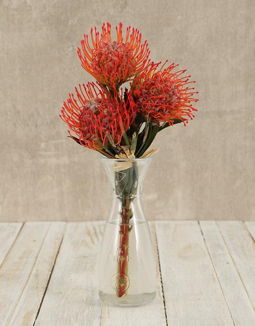 vase: Pincushion Proteas in Elegant Vase!