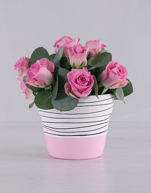colour: Pretty in Pink Roses!