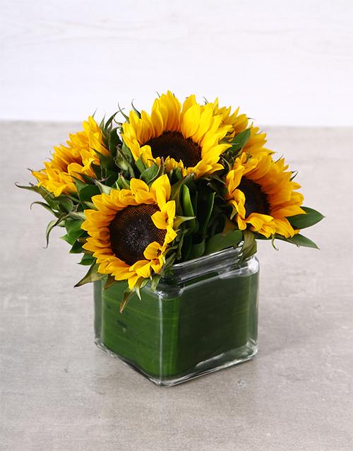colour: Sunflower Rays!