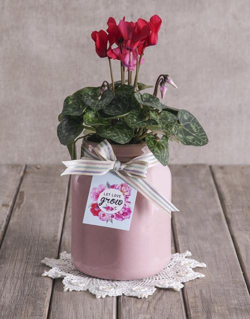 plants: Let Love Grow Cyclamen!