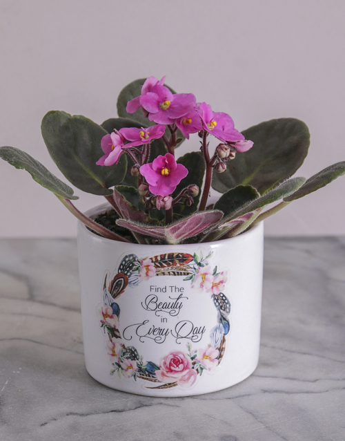 new-years: Beauty in Every Day African Violet!