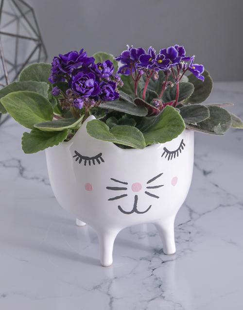 african-violets: African Violets in Cat Pot!