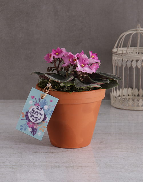 colour: You Are Special African Violet!