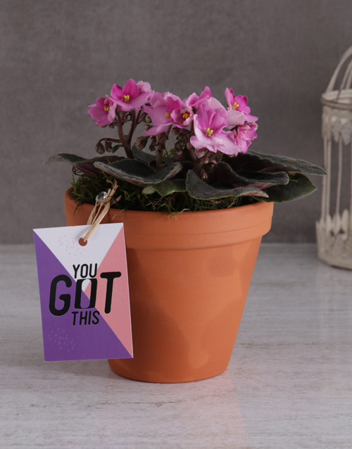 colour: You Got This African Violet!