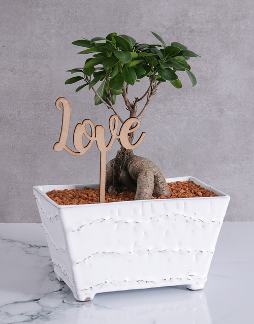 fathers-day: Ficus Bonsai with Love in a Rectangular Pot!