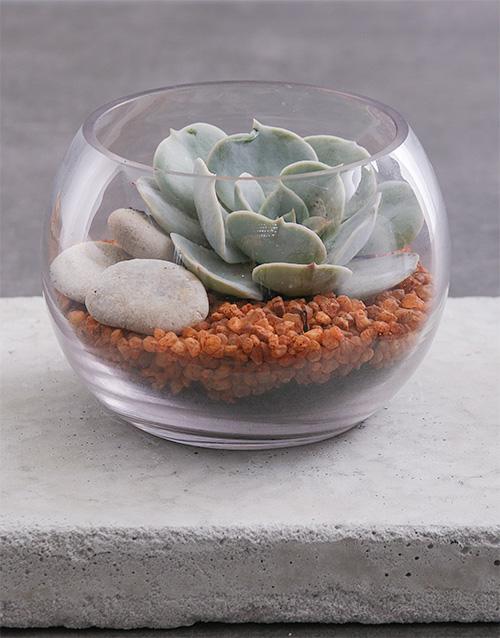 birthday: Small Succulent Fish Bowl Terrarium!