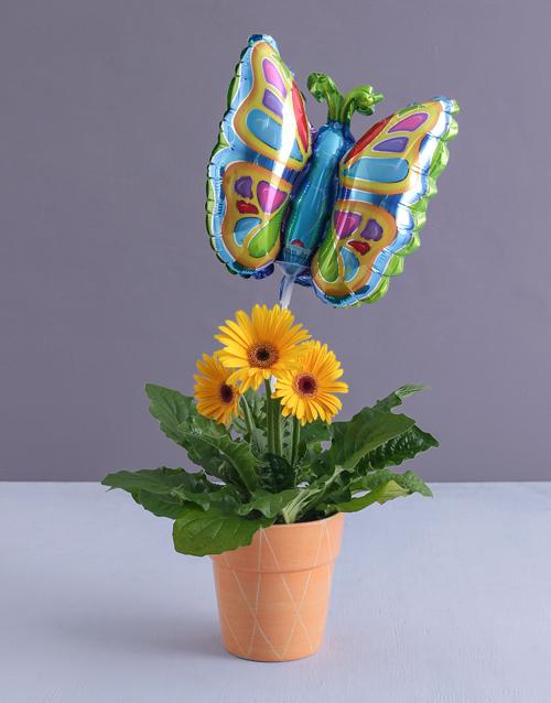 flowers: Butterfly Gerbera Plant!
