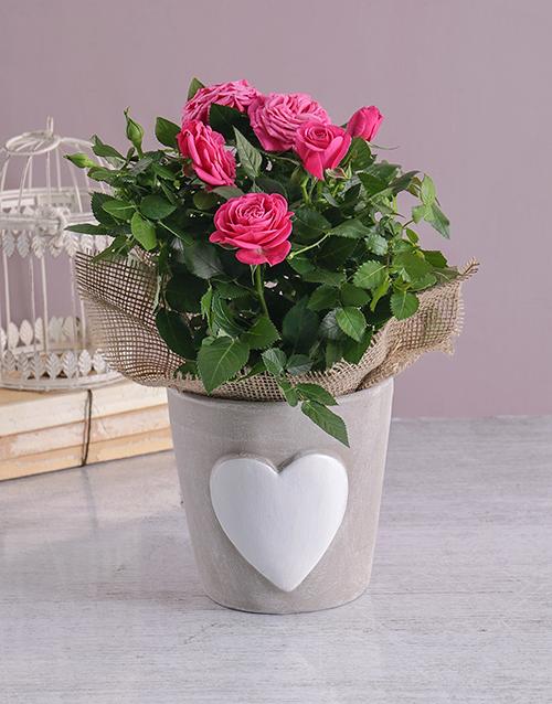 colour: Heartfelt Rose Bush!