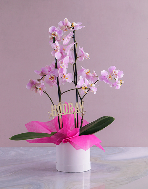 colour: Hooray Orchid in a Hatbox!