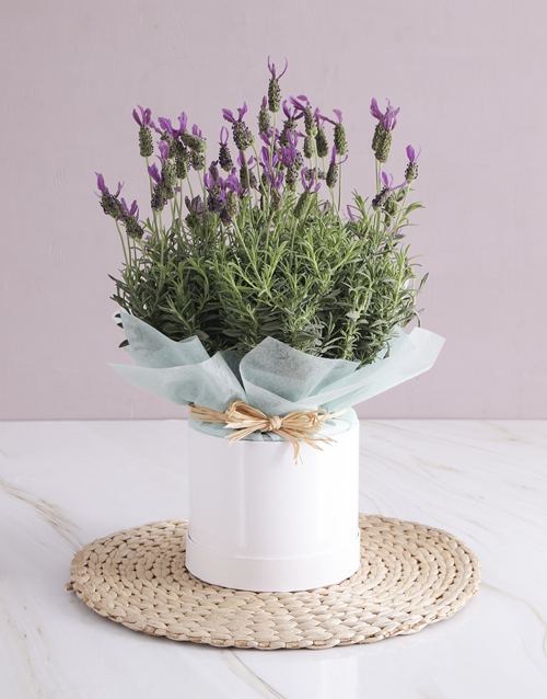 thank-you: Lavender Birthday Box!