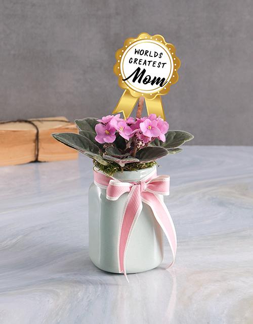 african-violets: Greatest Mom Violet Plant!