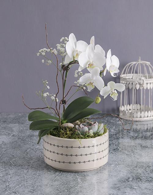 secretarys-day: Midi Orchid Garden In A Pot!