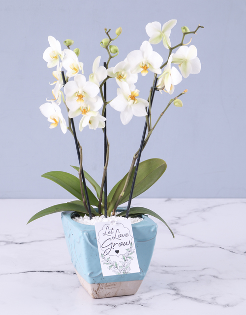 friendship: Orchids In A Pot!