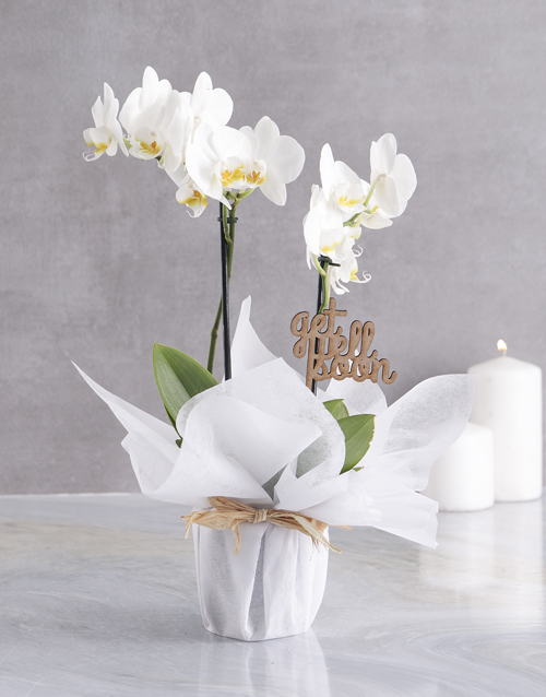 colour: White Midi Orchid Of Wellness In Wrapping!
