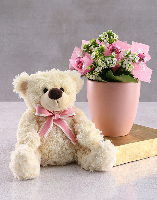 flowers: Blooming Kalanchoe and Teddy!