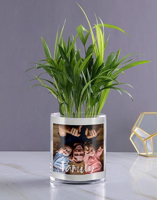 christmas: Personalised Family Areca Palm!
