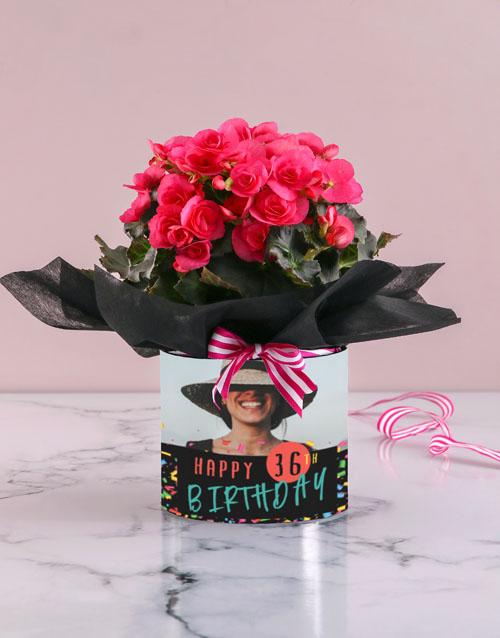 colour: Personalised Begonia Birthday Arrangement!
