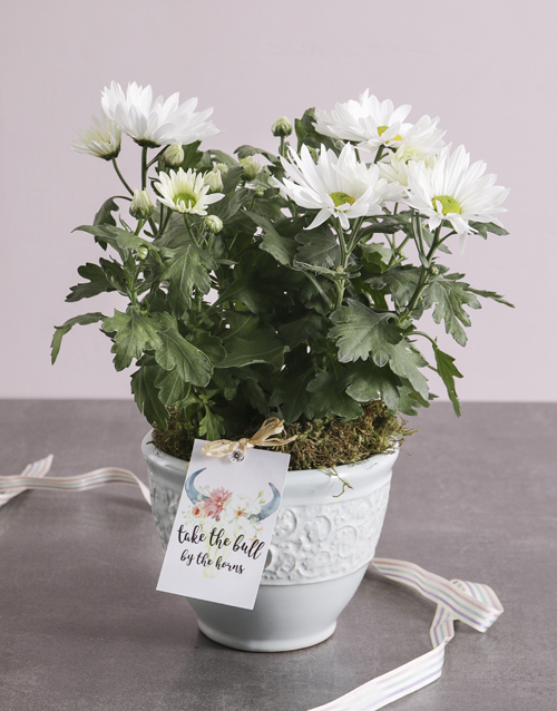 thank-you: Special Chrysanthemum Blossoms!