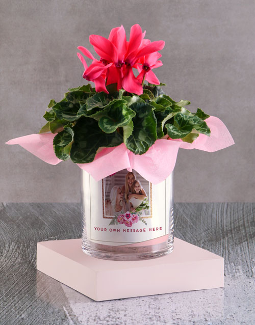 personalised: Cerise Cyclamen In A Photo Vase!