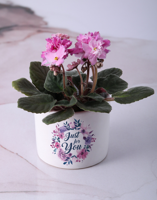 flowers: African Violets For You!