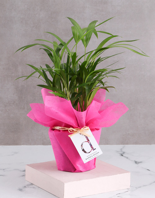 anniversary: Personalised Wrapped Areca Bamboo!