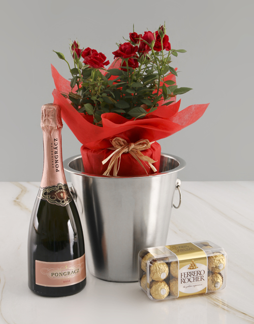 new-years: Rose Bush And Delicious Delights !