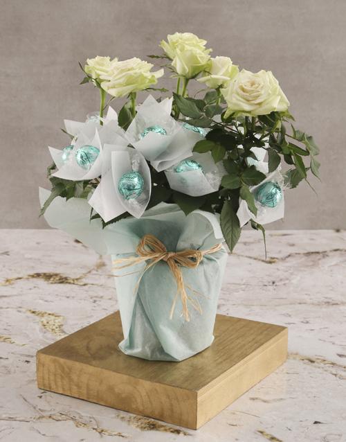 birthday: White Rose Bush And Chocolates!