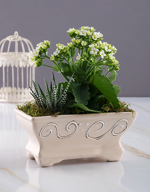 love-and-romance: White Kalanchoe in Ceramic Pot!