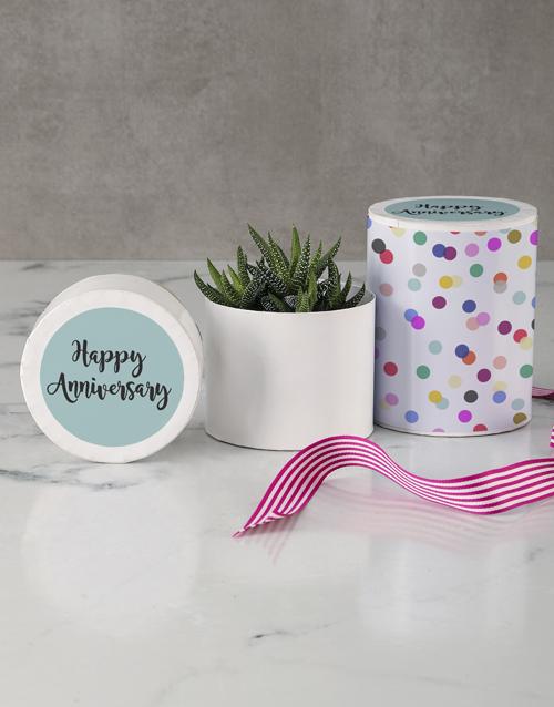 anniversary: Happy Anniversary Succulent In A Hat Box!