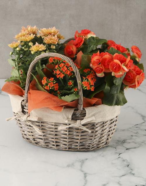 begonia: Orange Blooms Basket Arrangement!