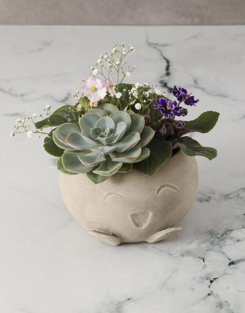 african-violets: African Violet Garden In Mojo Pot!