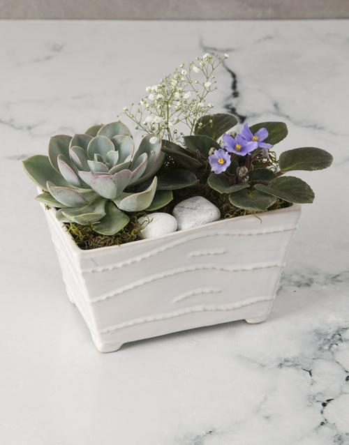 african-violets: African Violet Garden In Ceramic Pot!