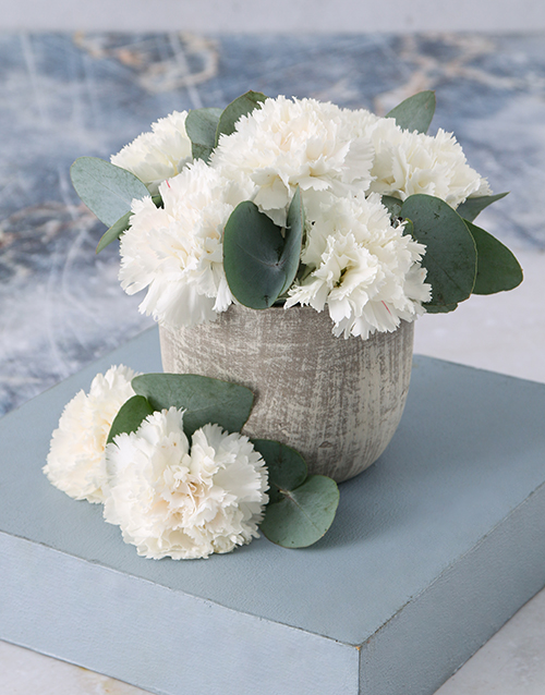 year-end: Immaculate White Carnations in a Pot!