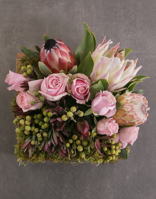colour: Mixed Proteas in Wooden Crate!