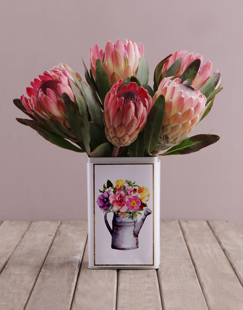 flowers: Proteas in a Printed Tin!