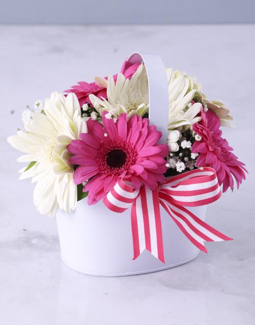 colour: Vanilla Variety Gerbera Array!