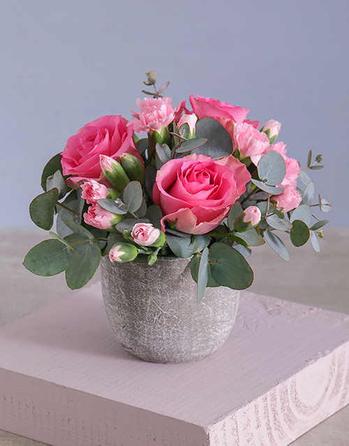 prices: Trio of Pink Roses in Cement Pot!