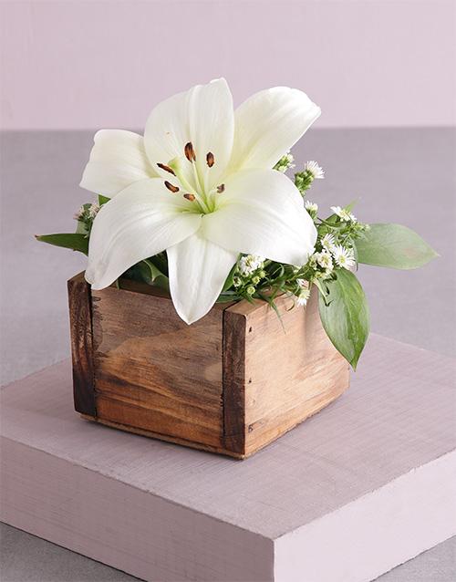 colour: Pure Lily Blossoms!