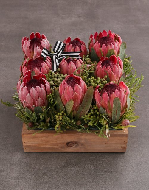 colour: Pink Protea Blossoms!