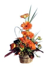 Picture of Ornate Orange!