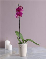 Picture of Phalaenopsis Orchid in Cream Pottery!