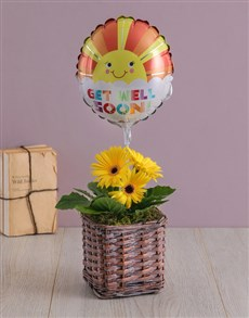 plants: Discovery Get Well Gerbera And Balloon!