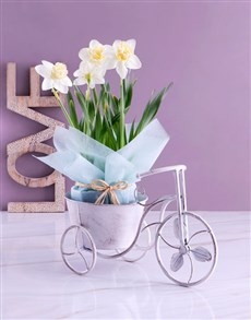 flowers: Daffodil in Vintage Tricycle Pot!