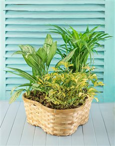 flowers: Mix of Plants in Gift Basket !