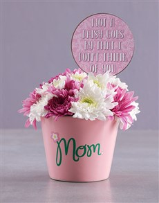 flowers: Pretty Sprays In Ceramic Pot!